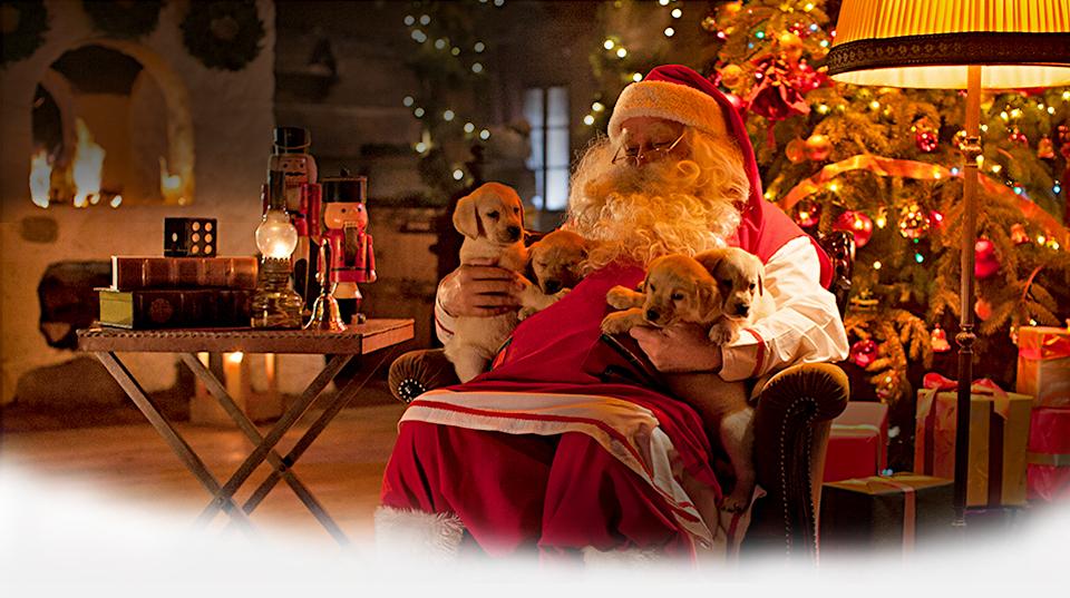 Wszystkie najważniejsze informacje o Świętym Mikołaju